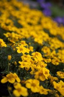 4eeed8eb126 Algaja aednik saab alustada istutuskastiga - Jardin Aianduskeskus