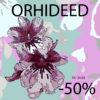 orhideed-50