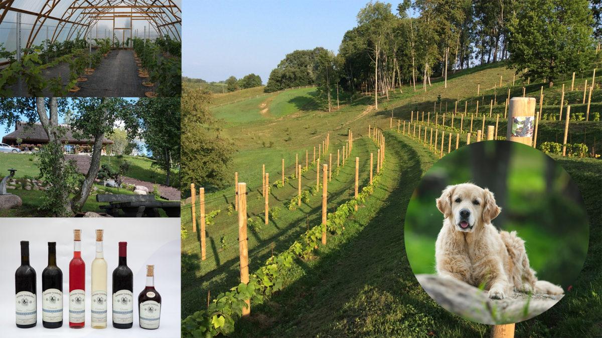 8b5b35e742d Viinamarja huviliste teed viivad Murimäele - Jardin Aianduskeskus